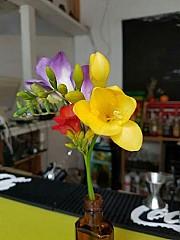 Faust Cafe und Disko