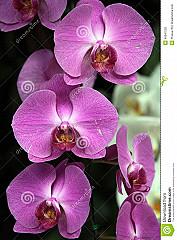 Asia Orchidee Thai & Sushi