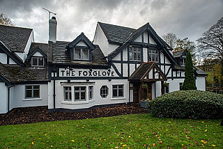 The Foxglove